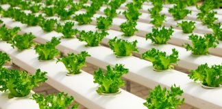 Engineering a circular food economy